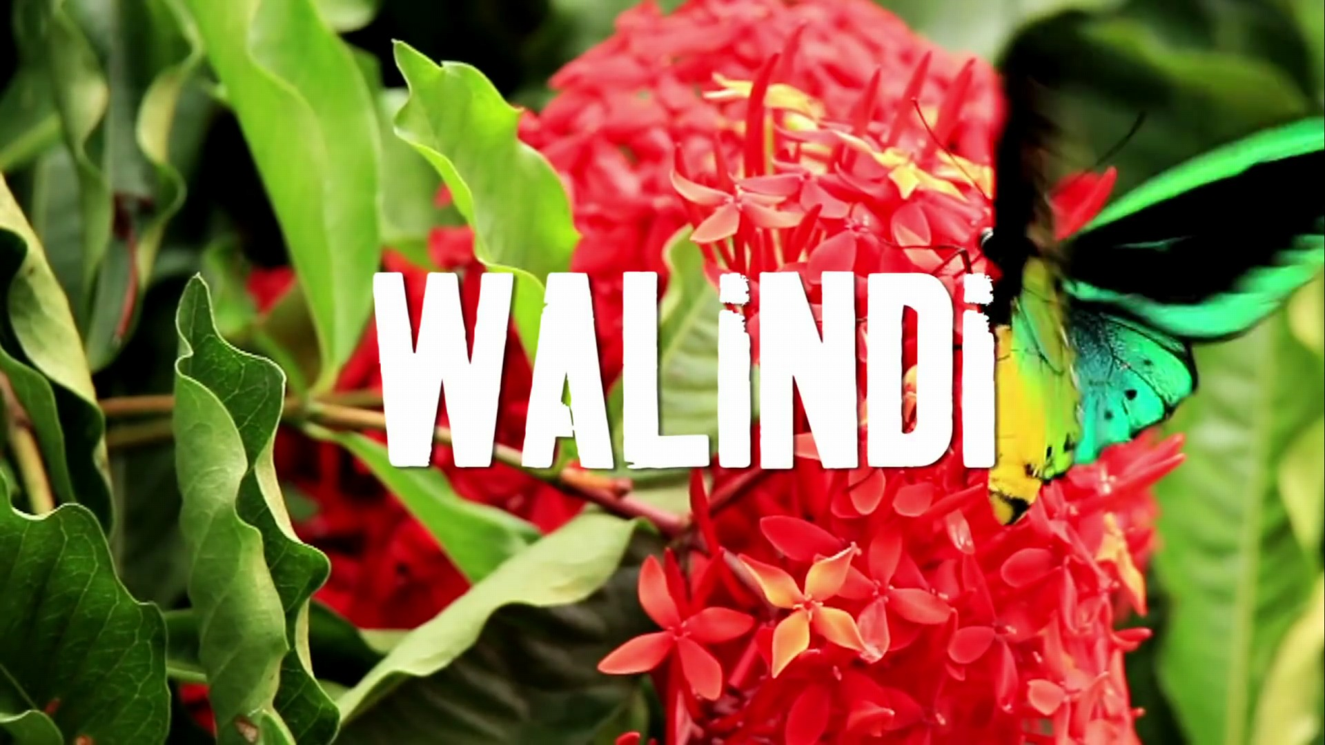 png_walindi_04