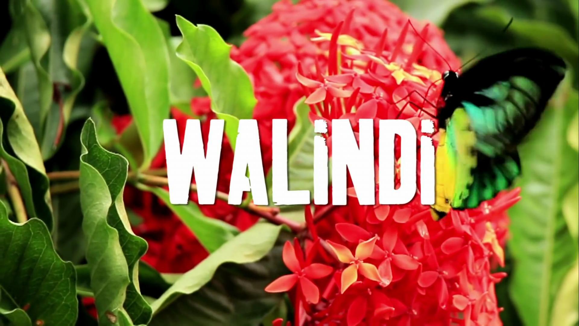 png_walindi_05
